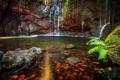 Картинка лес, скала, река, ручей, водопад