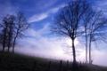 Картинка небо, деревья, туман, утро