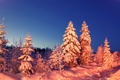 Картинка зима, лес, снег, вечер