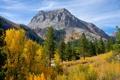 Картинка лес, горы, осень, небо, деревья