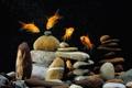 Картинка рыбки, камни, аквариум, золотые