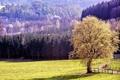 Картинка деревья, поляна, Природа