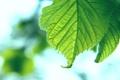 Картинка листья, листок, листки