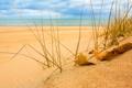 Картинка песок, море, небо, трава, листья