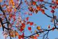 Картинка осень, небо, листья, дерево, ветви, крона