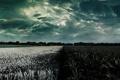 Картинка горизонт, небо, растения, природа, поле, цвета