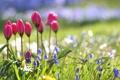 Картинка макро, цветы, природа, поляна