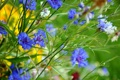 Картинка трава, цветы, природа, растение, стебель, луг