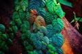 Картинка листья, природа, дерево, заросли, краски, лиана