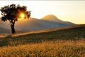Картинка солнце, лучи, дерево, холмы, утро, склон