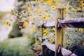 Картинка макро, цветы, забор
