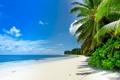 Картинка море, облака, пейзаж, природа, тропики, пальмы, sea