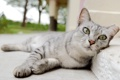 Картинка кошка, кот, бордюр, лежа, асфаль