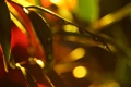 Картинка капли воды, macro. листья, зеленые, макро