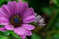 Картинка цветок, вода, капли, макро, роса