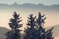 Картинка деревья, пейзаж, горы, туман