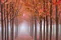 Картинка осень, деревья, туман, Лес