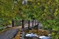 Картинка осень, лес, деревья, пейзаж, природа, река