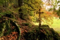 Картинка осень, лес, листья, природа, фото, мох, крест