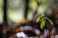Картинка листья, блики, фон, росток, ветка