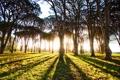 Картинка свет, тени, деревья