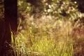 Картинка колоски, боке, трава, лето, дерево