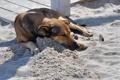 Картинка песок, друг, собака