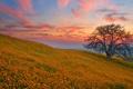 Картинка поляна, закат, холмы, поле, дерево, цветы