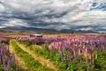 Картинка дорога, поле, цветы, горы, дом