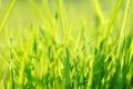 Картинка трава, зеленый, весна