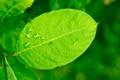 Картинка лето, капли, лист, листок, влага, ветка, зеленый лист