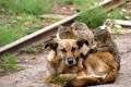 Картинка трава, кошки, камень, рельсы, собака, друзья, лежат