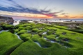 Картинка море, камни, мох, United States, California, San Diego, Draper Villas