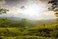 Картинка солнце, природа, холмы, чай, балки, туманные, Холмы Муннара