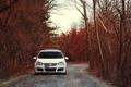 Картинка дорога, деревья, природа, ветви, Volkswagen, cars, auto