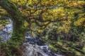 Картинка листья, ветки, ручей, дерево, течение, мох, обработка