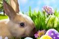 Картинка трава, цветы, ромашки, яйца, весна, кролик, луг