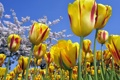 Картинка небо, цветы, цвет