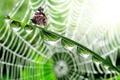 Картинка капли, стебли, бабочка, паутина