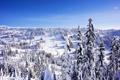 Картинка зима, снег, пейзаж, природа, фото, ель