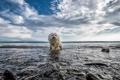 Картинка друг, природа, вода, взгляд, собака