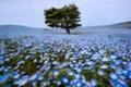 Картинка поле, цветы, дерево, весна