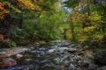Картинка деревья, лес, река, осень, камни