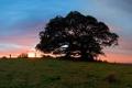 Картинка лето, закат, природа, дерево, большое