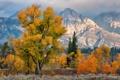 Картинка осень, деревья, горы, США, штат Вайоминг, национальный парк Гранд-Титон