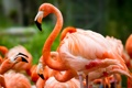 Картинка зелень, птицы, фламинго