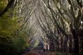 Картинка деревья, природа, город, парк