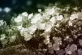 Картинка цветы, обработка, белые, много, мелкие