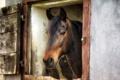 Картинка фон, конь, окно