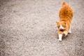 Картинка кот, животное, рыжий, подтягивается